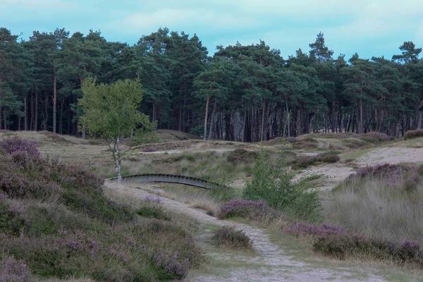 MKB-Nederland lanceert Milieubeheer Programma